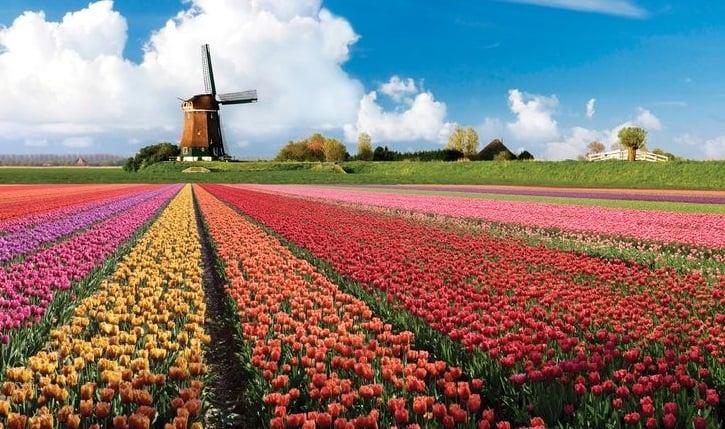 Jardim Keukenhof em Amsterdã e moinho de vento