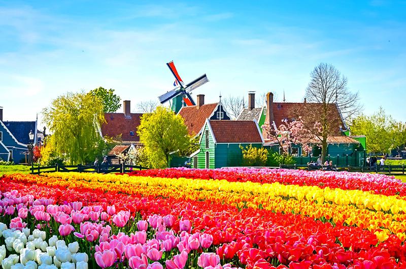 Zaanse Schans em Amsterdã