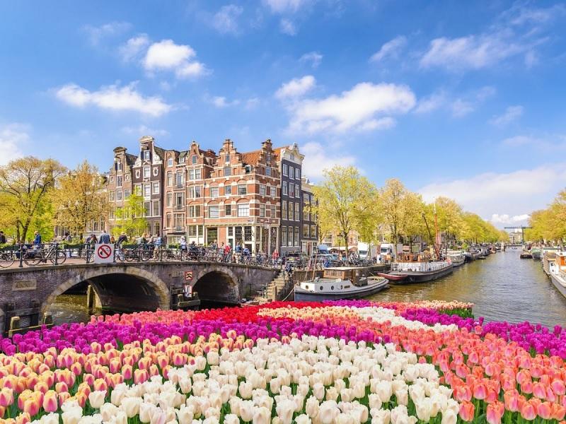 Como ver tulipas em Amsterdã